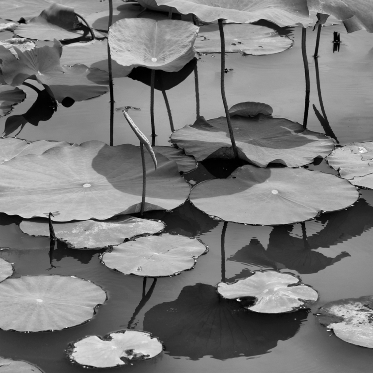 Paul Jett, Young Lotus Series